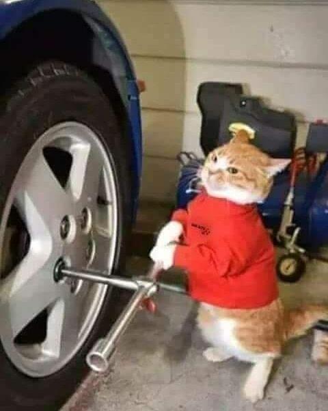 各种职业的猫咪!