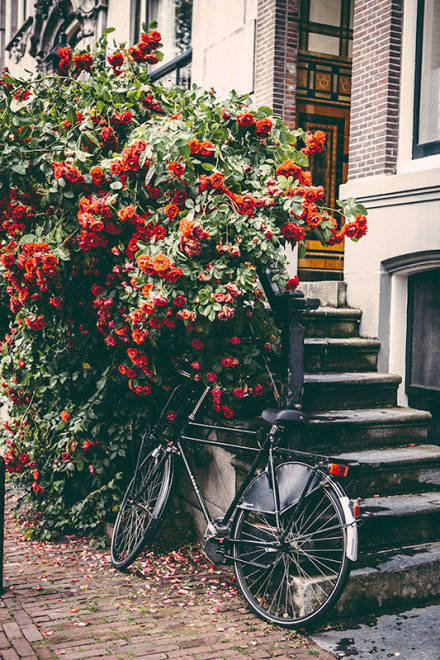 阿姆斯特丹的街角