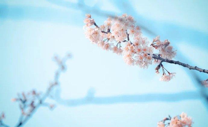 江苏大学:春天在这里呀