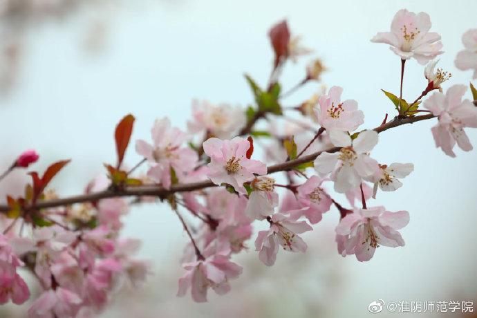 淮阴师范学院 :春暖花开