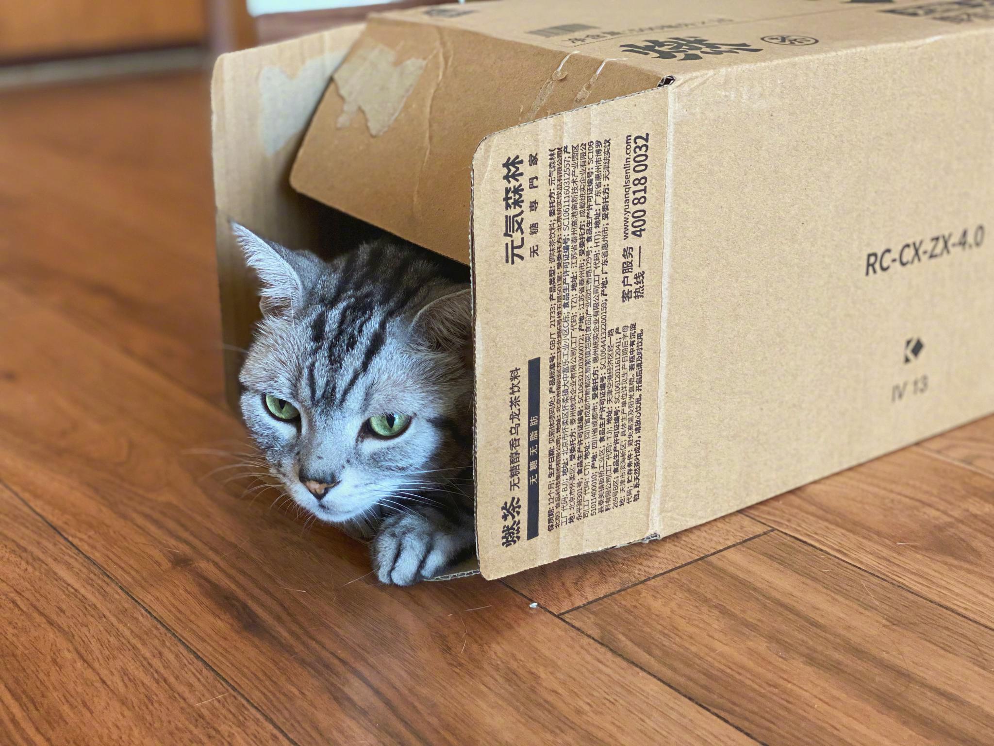 听说家里每多出一个空箱子就会长出一只猫,我试过是真的。