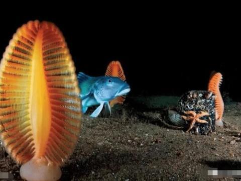 像笔一样的海洋生物,就像是落在海里的羽毛笔,是水螅虫的居所