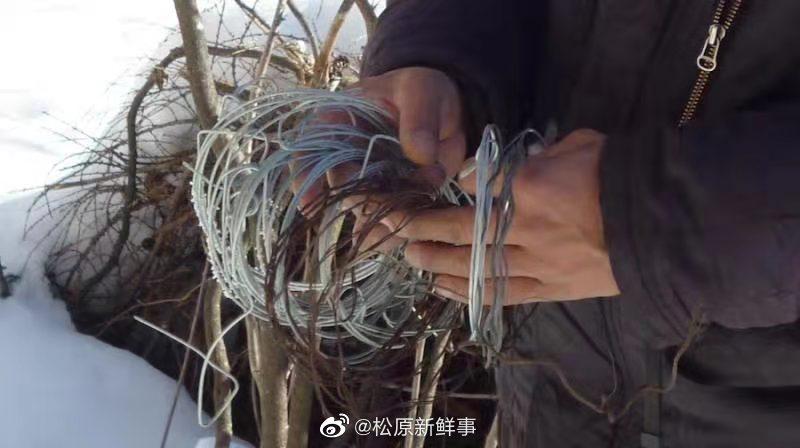 吉林拍到野生东北虎视频人人一平米,保护生态系统完整性