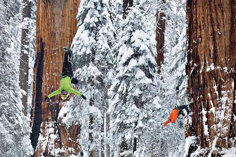 这棵活了3200年的红杉树,是世界上最古老的树,身高76米,腰围8米