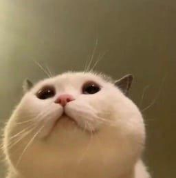 前置摄像头下的猫猫,不同的表情和姿势充分展现了百态猫生