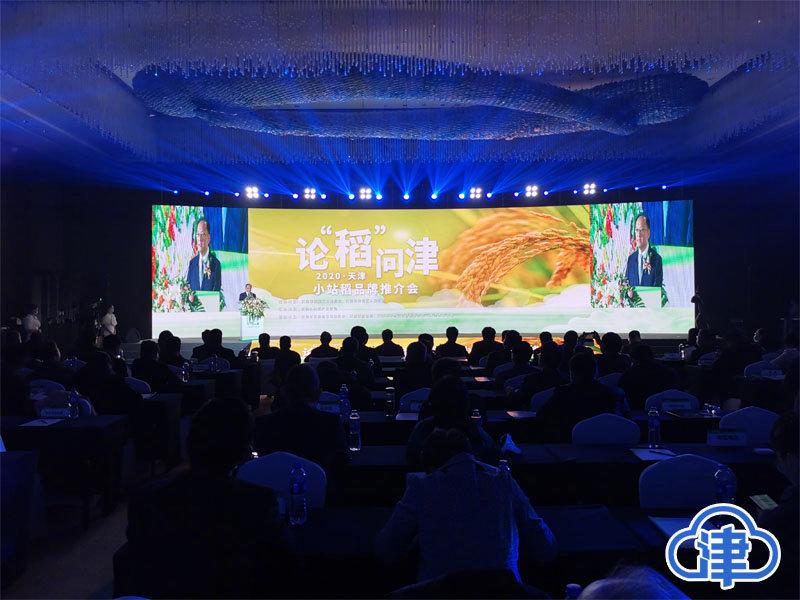 从产到销融合发展 天津打造小站稻全产业链