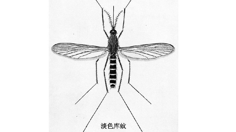 一只蚊子的自述——常躲在地下室越冬 现在已经开始活动