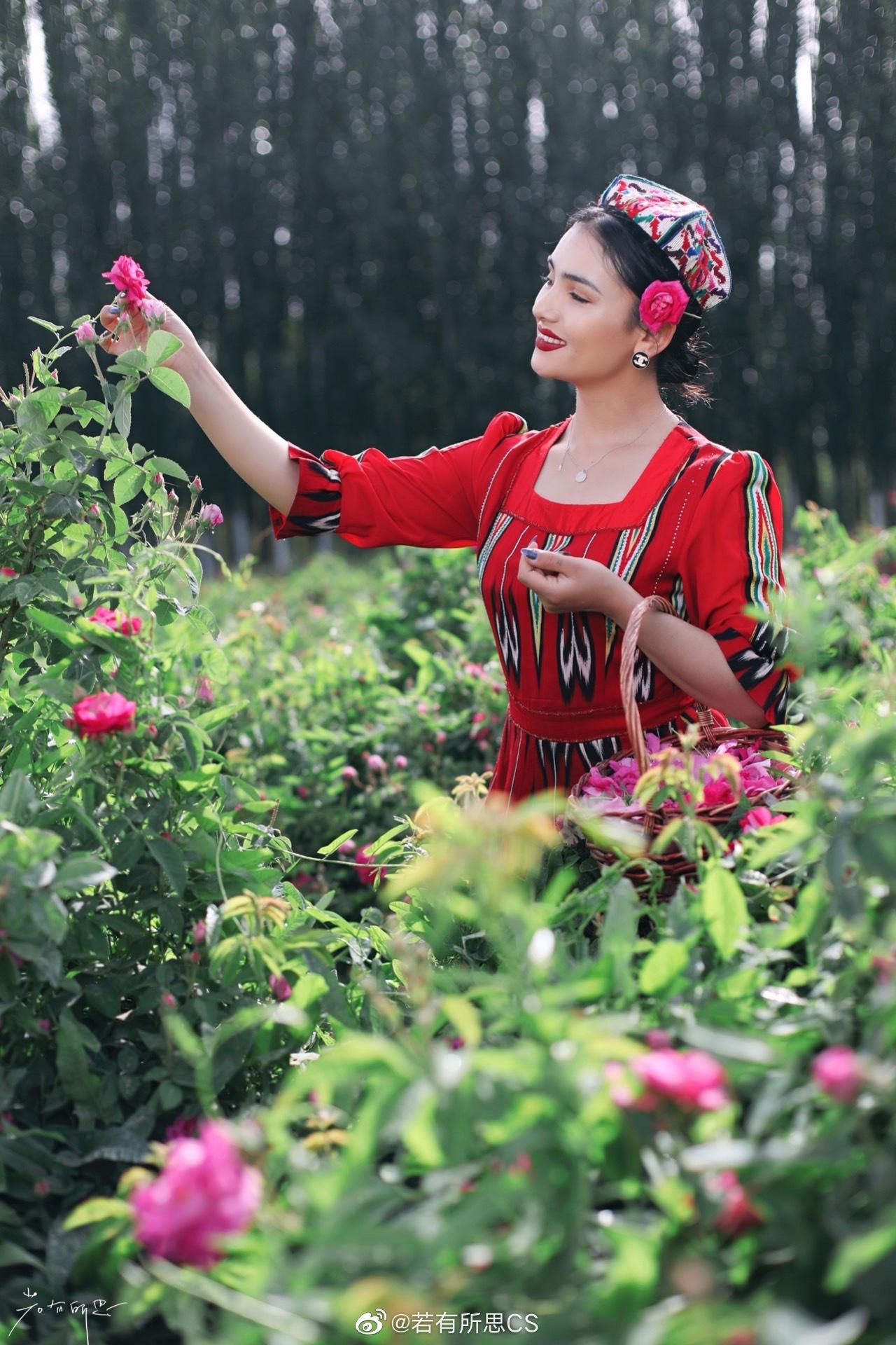 新疆和田的于田县,这里种植了4.6万亩大马士革玫瑰