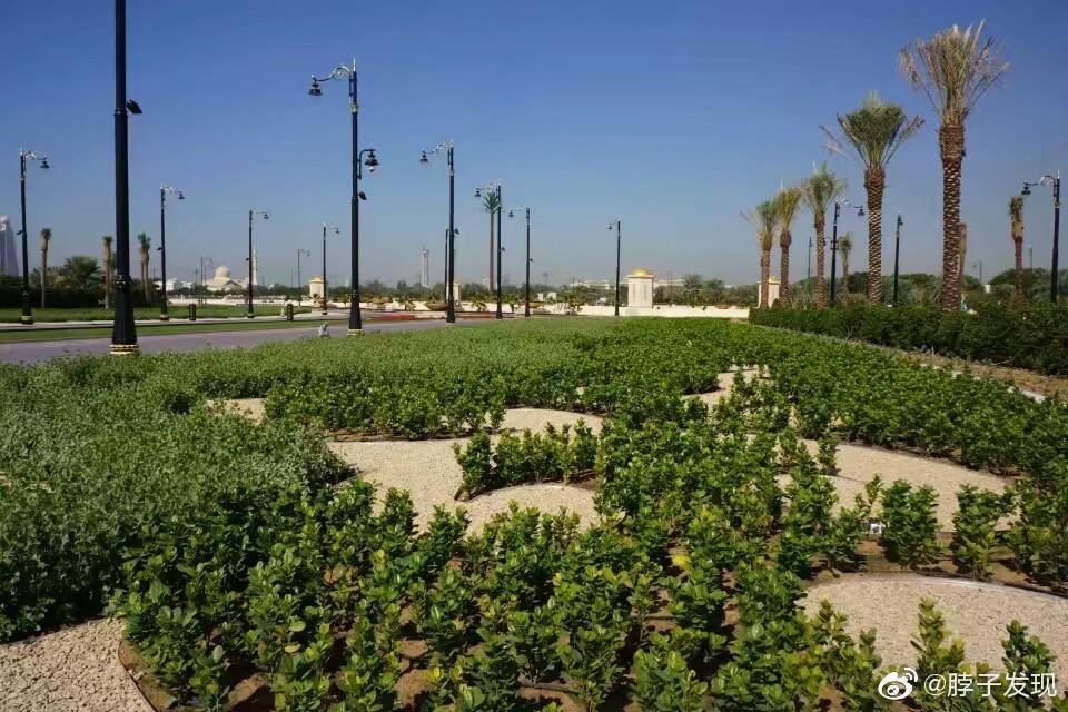 对于严重干旱而又富得流油的阿拉伯海湾国家而言