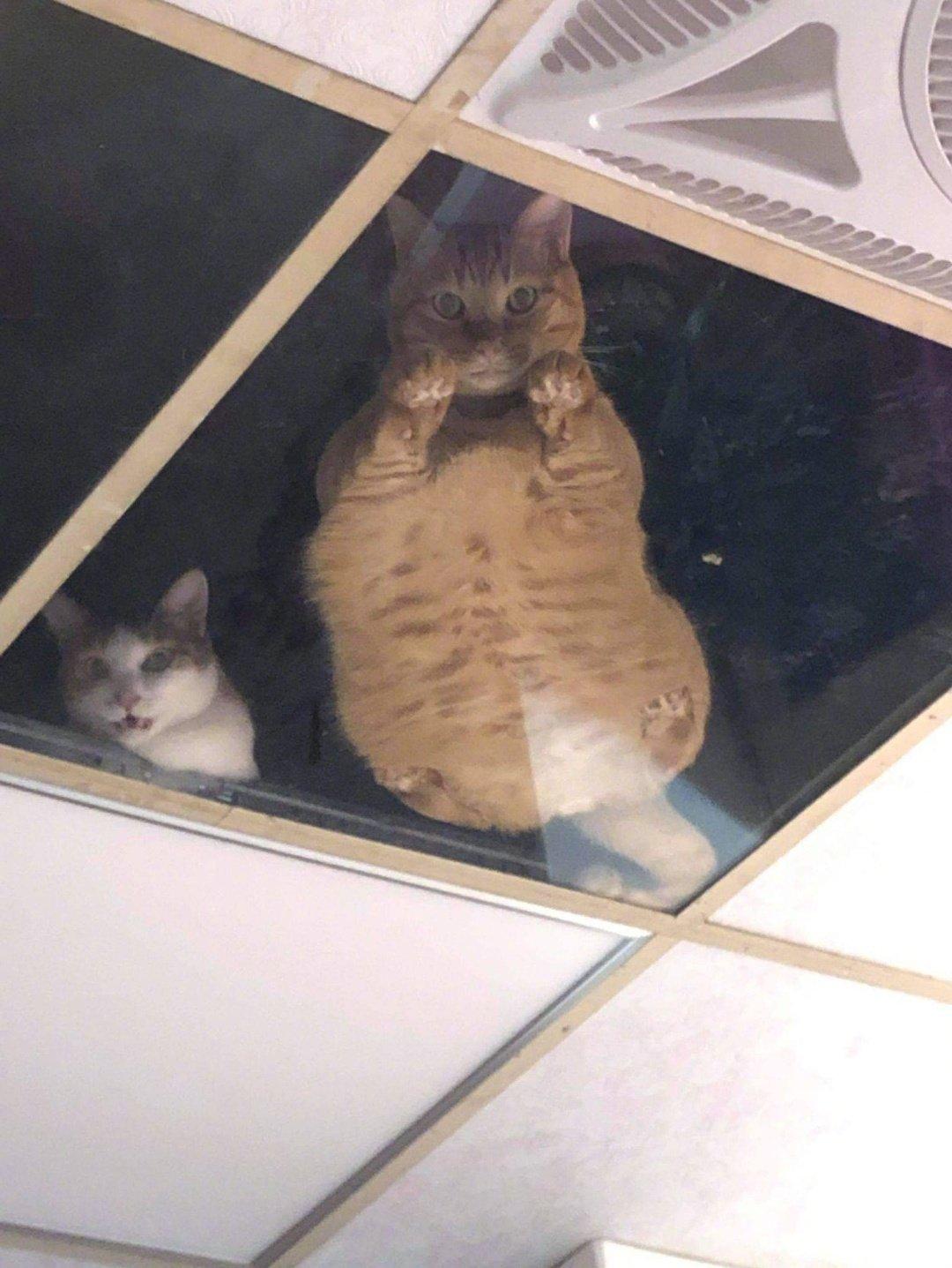 网友感觉屋顶有东西在盯着自己,抬头就看到这一幕....