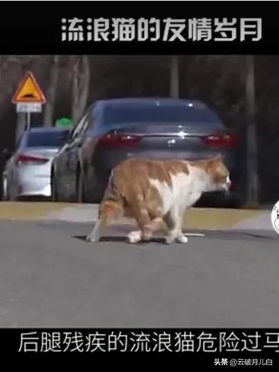 动物也有情义在,网友在不经意之间拍下来这样一个感动人心的视频