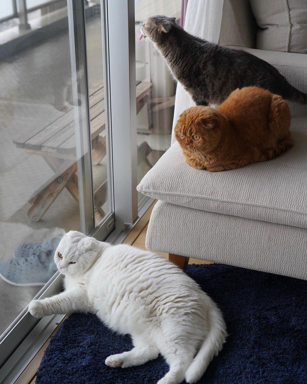 猫咪慵懒得靠在玻璃门上,脸都挤歪了 by/IG/rojiman