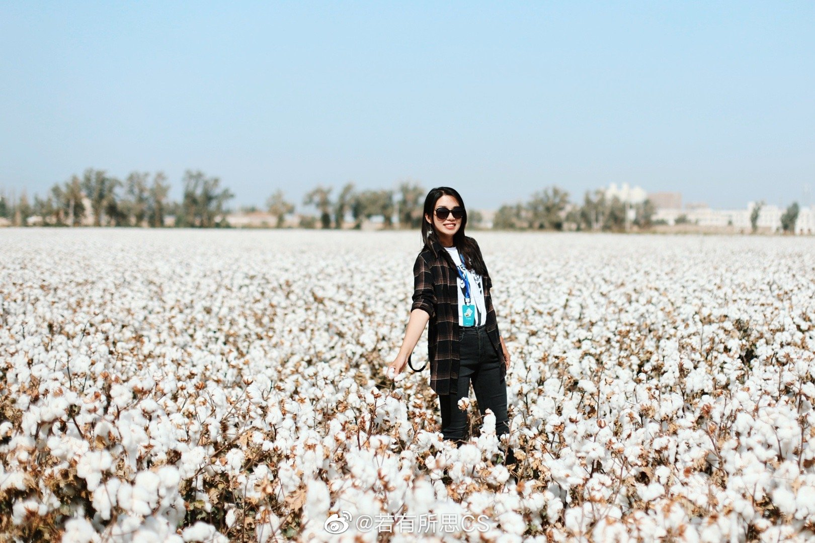 新疆库尔勒尉犁县,路边遇见两大片棉花田