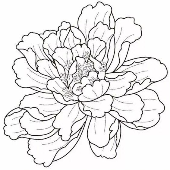 各种花卉的线稿 。