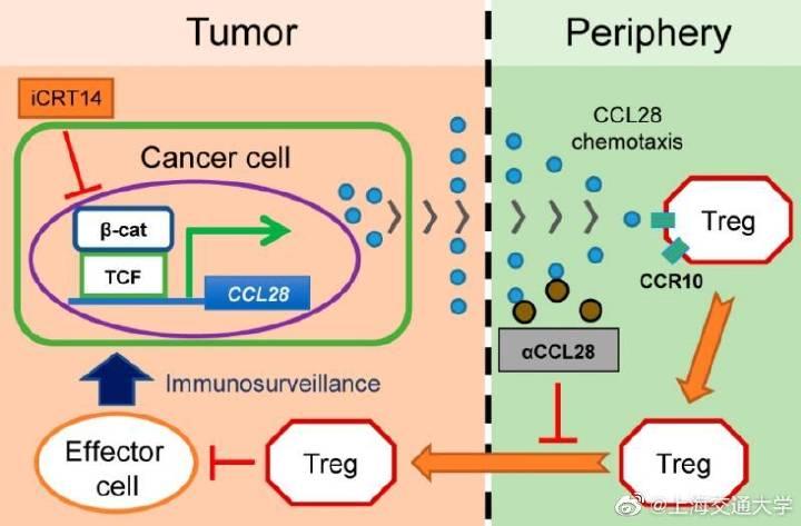 上海交通大学高维强与马斌团队提出胃癌免疫治疗新思路