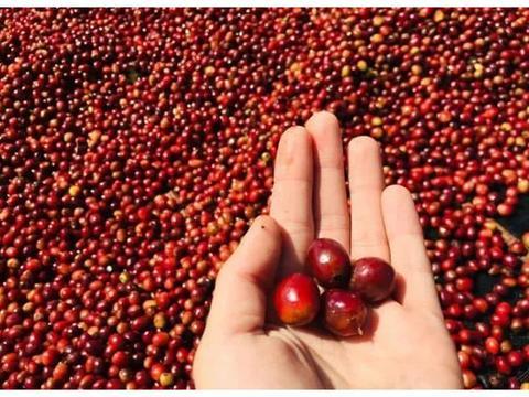 日晒vs水洗,如何萃取不同处理法的咖啡豆?