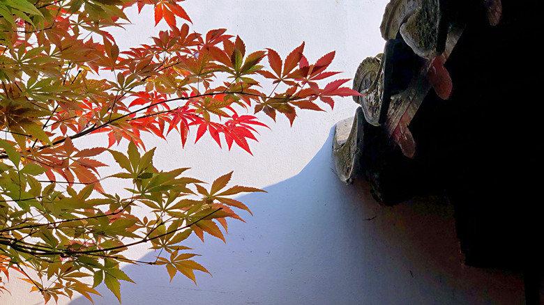 园林是中国文人的极致浪漫。南京瞻园,满园秋色入画屏。  @丰收