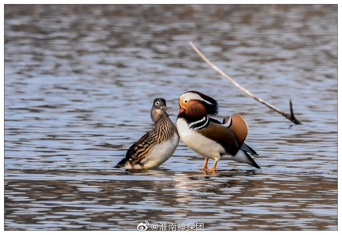 淮南拍摄爱好者的打卡地——鸳鸯湖