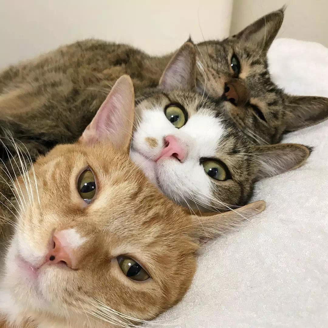 看看日本网友这一家子的神同步猫咪兄弟就知道了