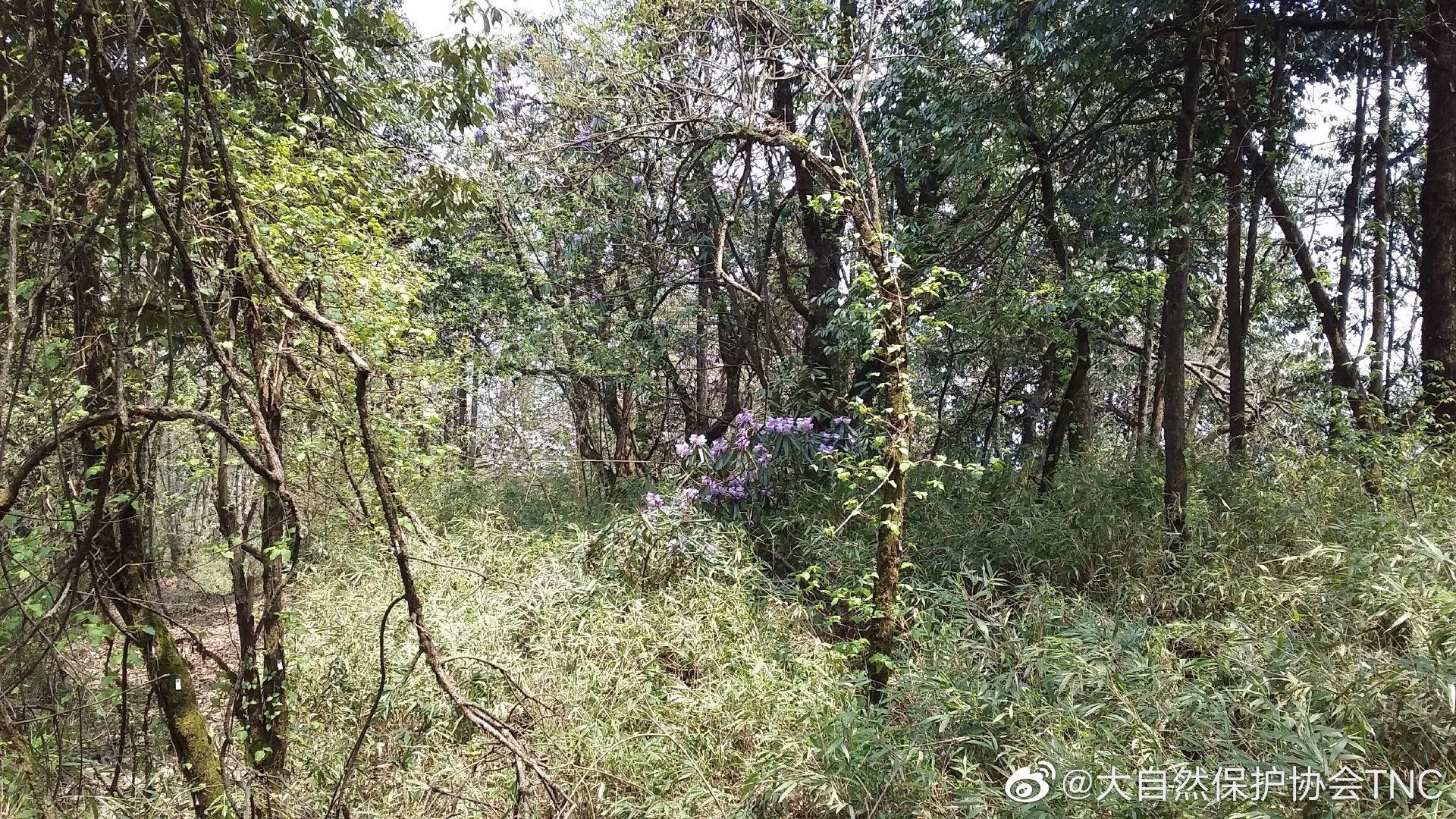 龙溪-虹口国家级自然保护区位于四川省都江堰市北部