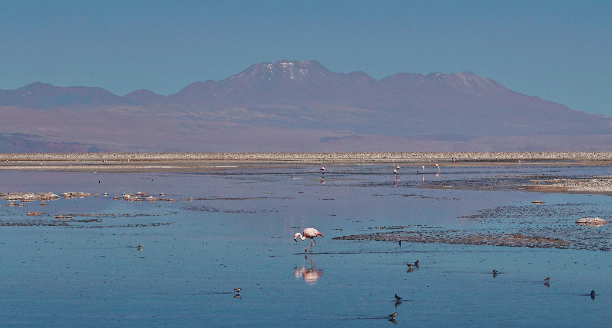 位于南美洲高原的阿塔卡马沙漠,主体在智利境内