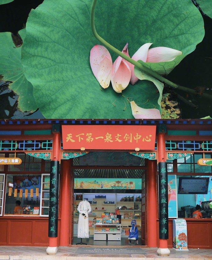 ↑还记得大明湖畔的夏雨荷么摄影@奶泡凤梨酥