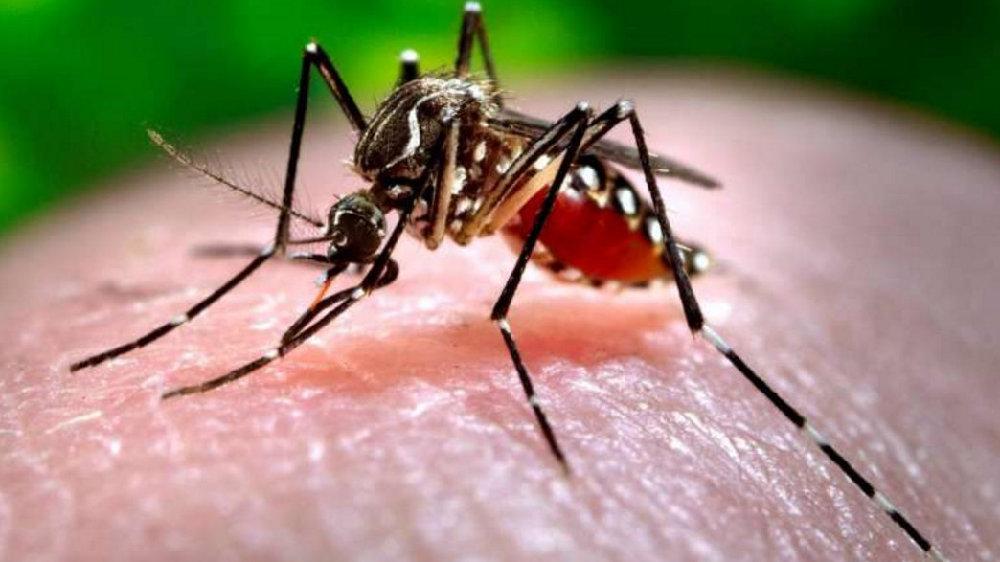 最古老的天然杀虫剂为何能驱蚊?