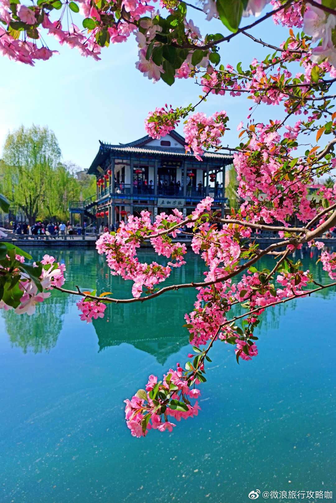 美翻!《鬓边不是海棠红》火啦!泉城最美的海棠花海也要火啦