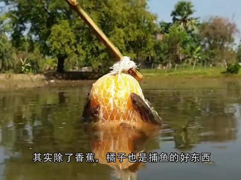 女子制作捕鱼陷阱,河里鱼儿纷纷中招,女子便收获满满!