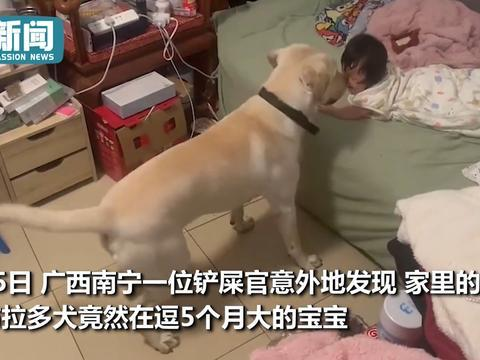 2岁狗狗帮主人带娃 摇尾巴转圈圈逗笑小宝宝