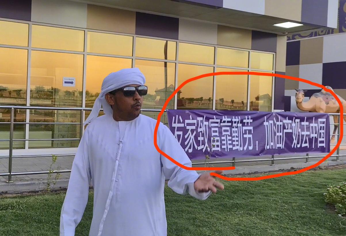 迪拜皇室打工你见过吗?迪拜有个骆驼场就是皇室的