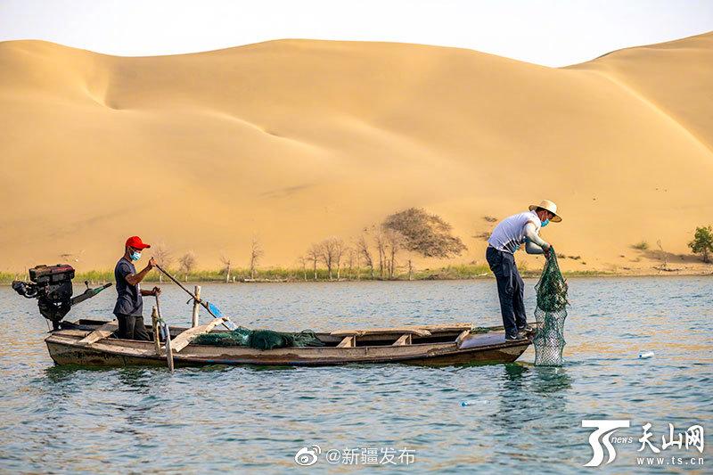 尉犁:塔克拉玛干大沙漠里养出大螃蟹