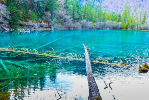 九寨沟再迎春季降雪 长海五彩池开启奶盖模式