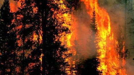 亚马逊雨林大火又重现!7月份着火数千起!火灾频发的原因很无语