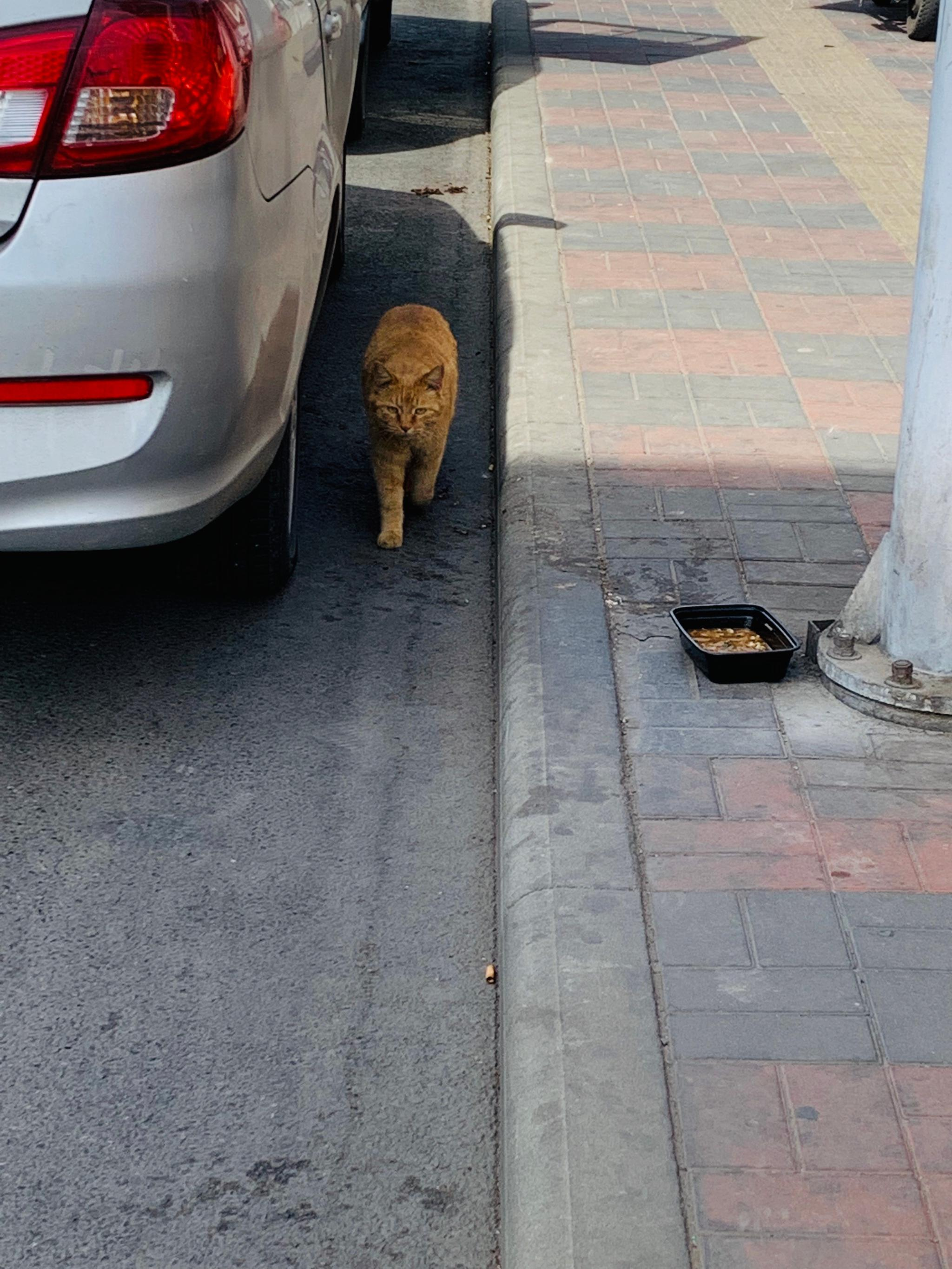 今天遇到一只被风吹的依然贼骄傲的大橘猫