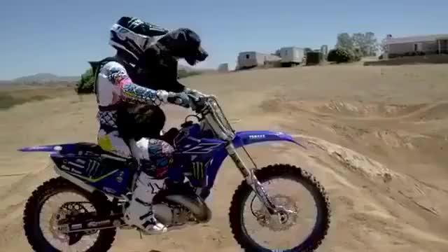 狗子:我也想飞 骑手:好的