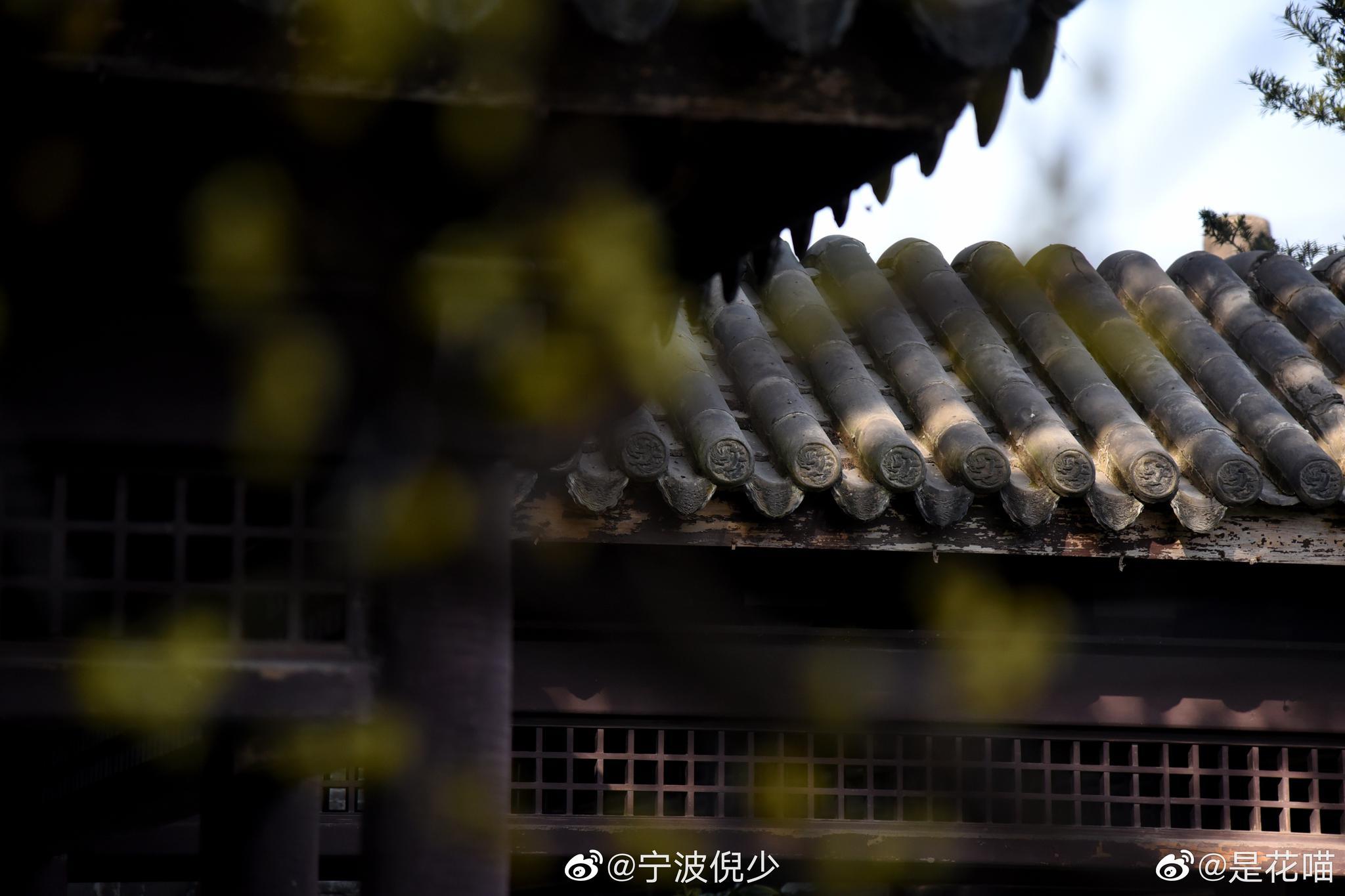投稿:月湖蜡梅 // 松竹凌空 疏影黄昏