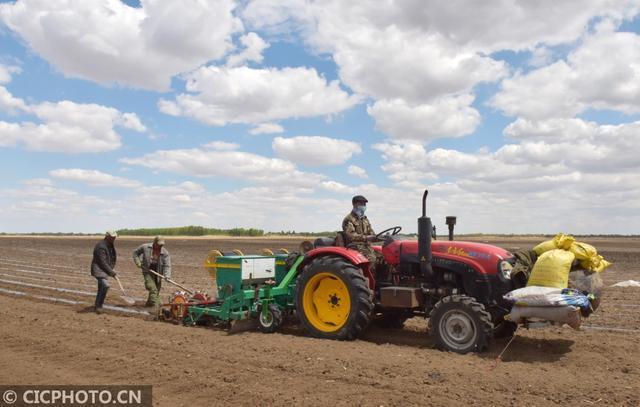 内蒙古科尔沁:有机绿色农产品试验田开幕