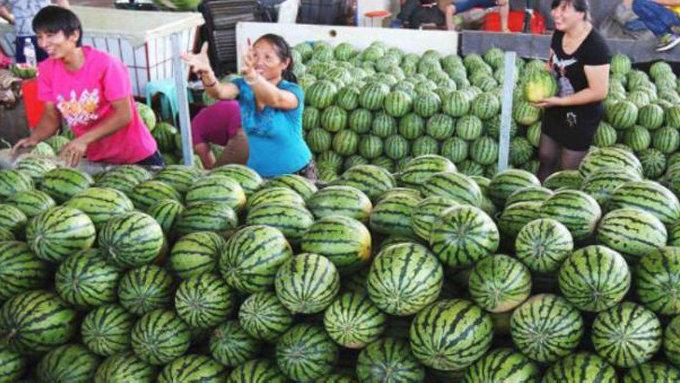 你看石家庄的瓜又香又甜……吃瓜群众的自我修养拿走不谢!