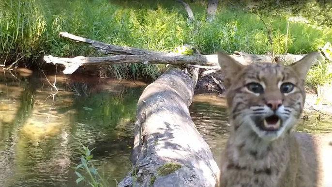 通过隐藏在小河边上的摄像机,我们看到了森林童话真正的样子