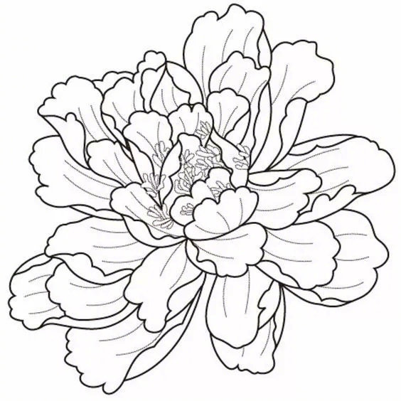 各种花卉的线稿