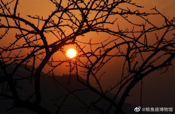 万年枝上夕阳红......