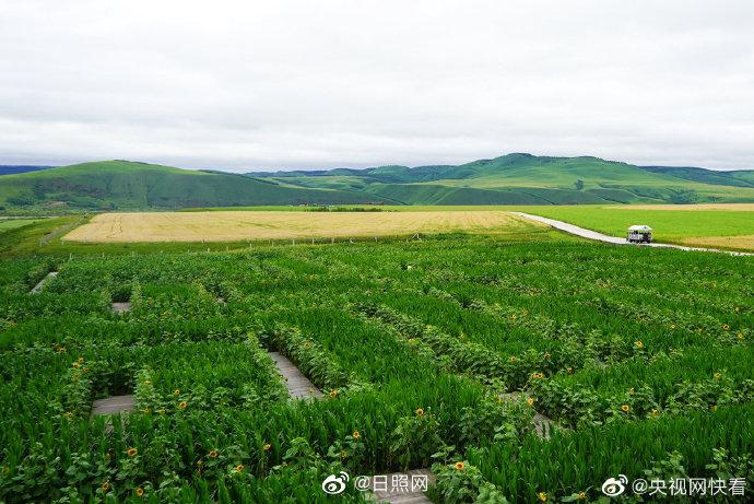 边陲小城种出世界最大农作物太极图