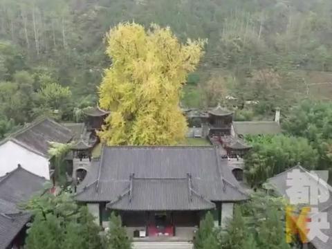 西安古观音禅寺预约限额有调整 周末节假日每天1000人