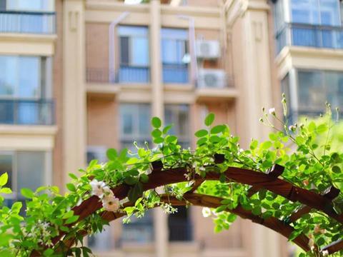 一个男人的花园,月季爬满了藤,铁线莲开爆