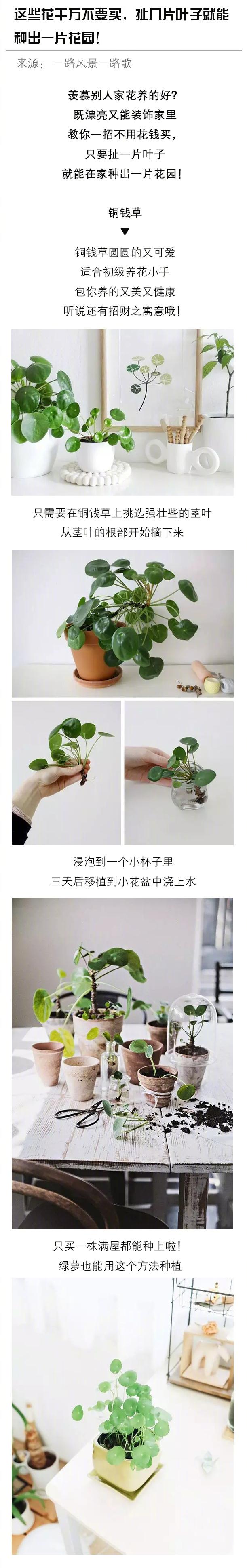 这些花千万不要买,扯几片叶子就能种出一片花园!