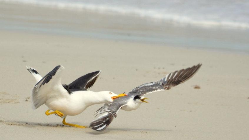 在面对栖息地变化时,哪种鸟儿更不容易灭绝?