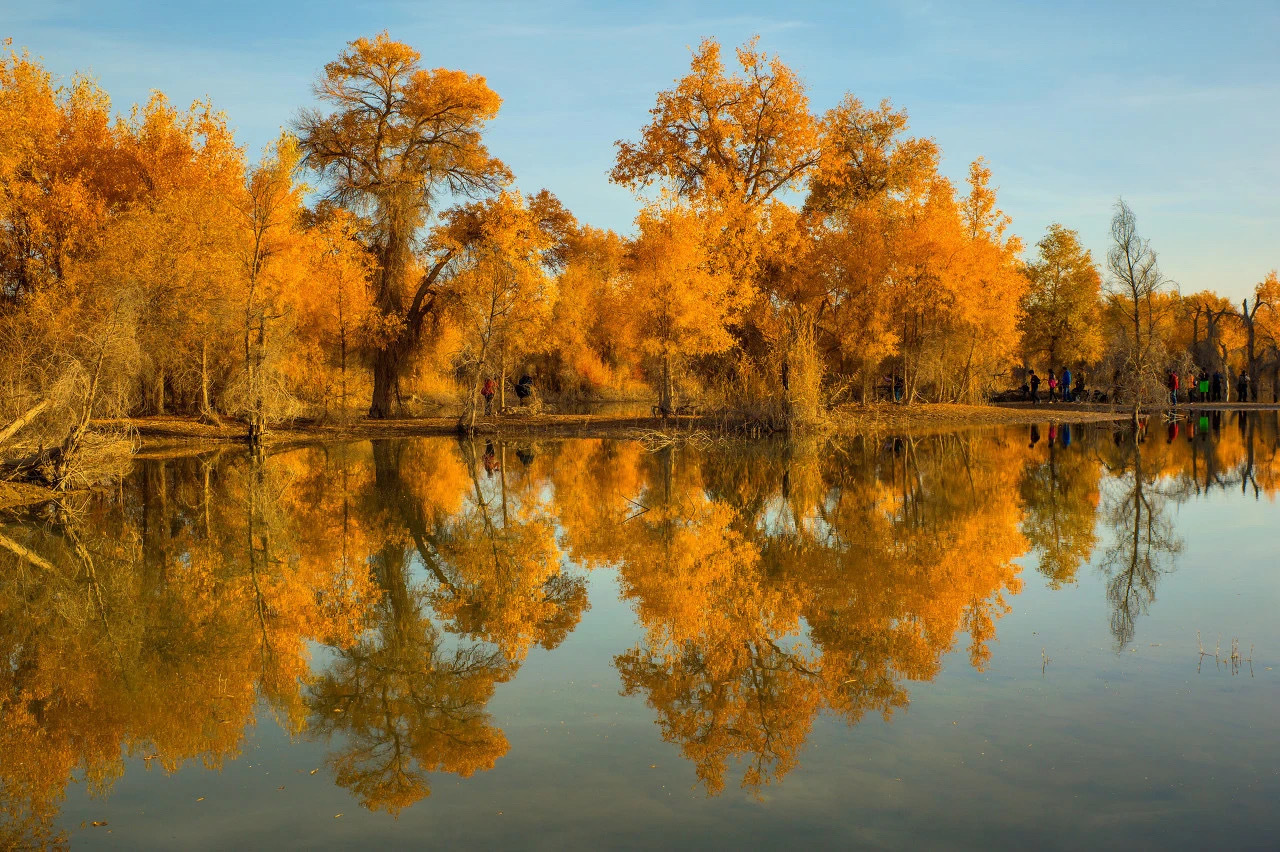 轮台胡杨林,野生的胡杨林长在塔里木河畔,每到秋天便层林尽染