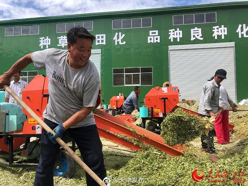 人民网:紫花苜蓿遍山坡 肉羊肥美满羊舍