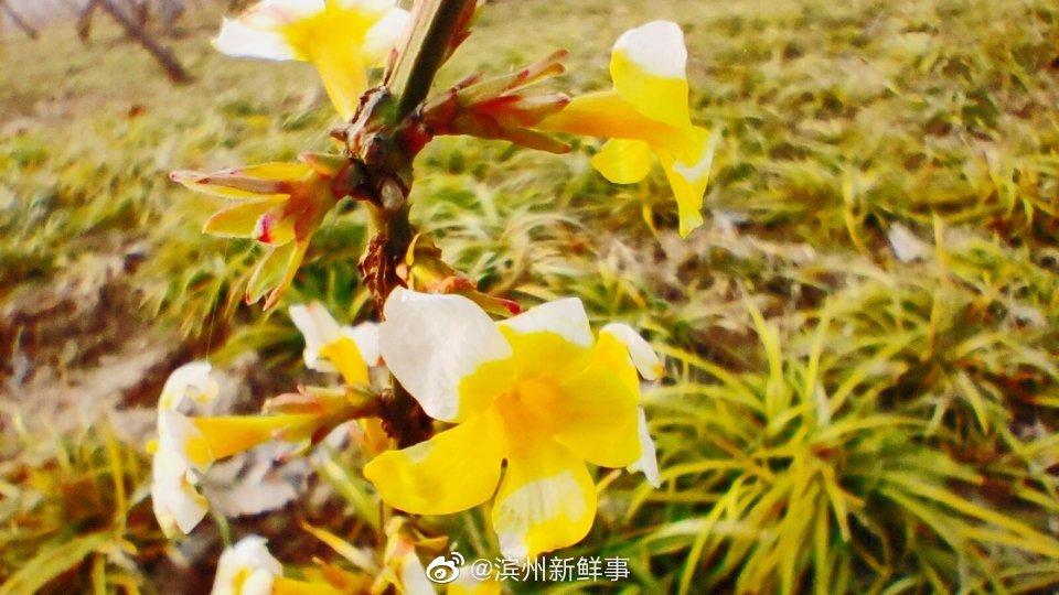滨州植物园